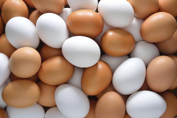 Kiếm bộn tiền nhờ gà đẻ trứng toàn lòng trắng